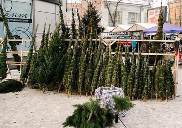 В Иркутске откроются елочные базары