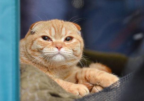 В Иркутске проведут выставку котят